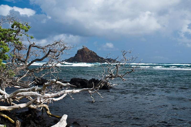 Hana - Alo Island bird sanctuary
