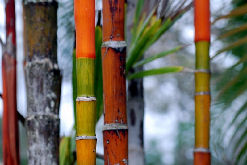 palm tones