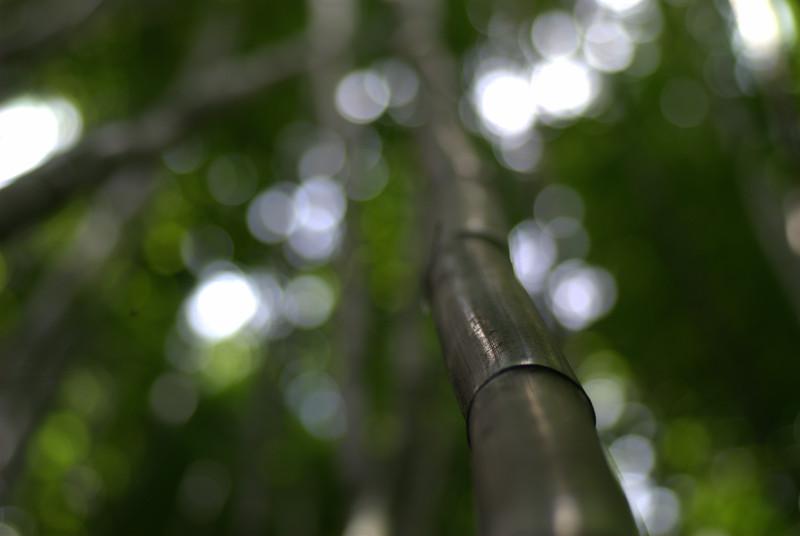bamboo blur- 'ohe
