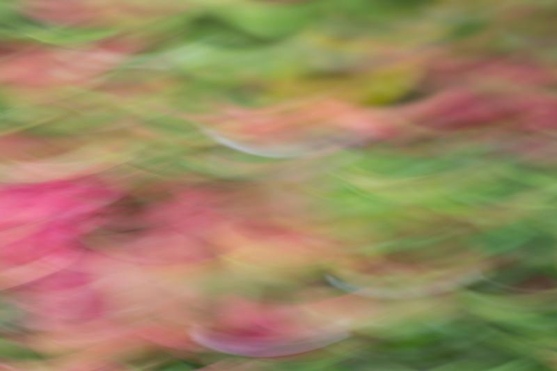 012_Maui_Photography_Aubrey_Hord-0241
