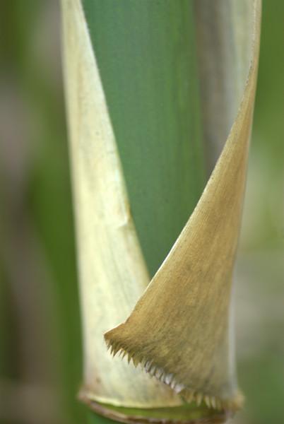 bamboo wrap- 'ohe