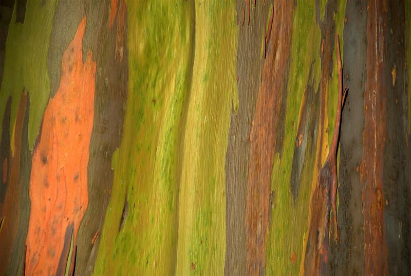 eucalytus bark 2
