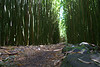 bamboo forest trail 4