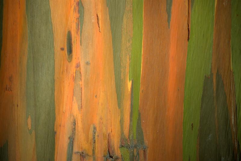 Hana - Rainbow Eucalyptus bark