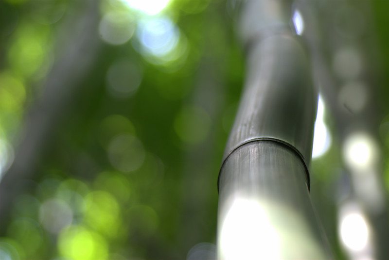 bamboo squiggle- 'ohe