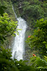 AHP Waimoku Falls through foliage vert1