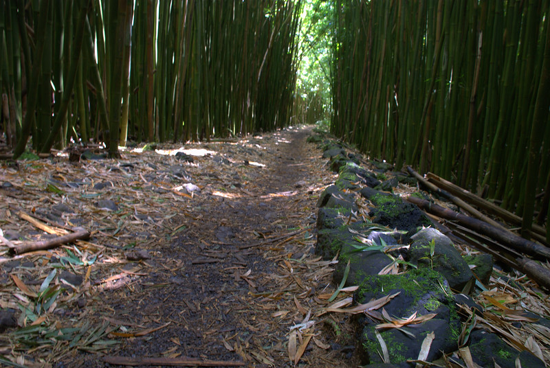 bamboo trail 1