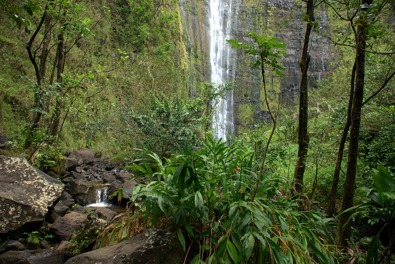 waimoku through trees
