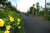 hibiscus road
