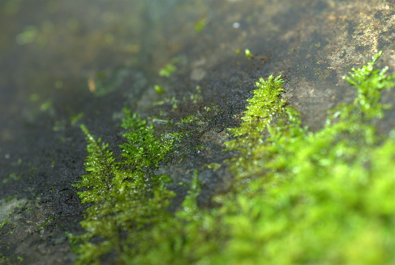 fern rock detail