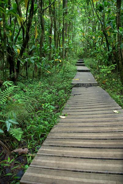 boardwalk straight to waimoku