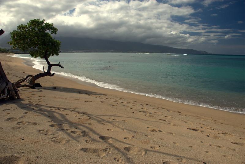 beach tree shadow