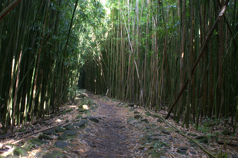 bamboo forest trail 1