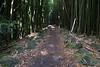 bamboo forest trail 2