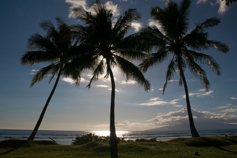 Lahaina - Olowalu Palm Trees in the afternoon sun with Lanai in background