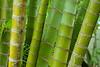 Palm Grove 1