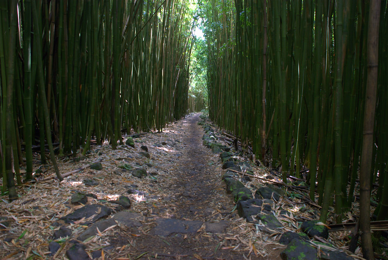bamboo forest trail 6