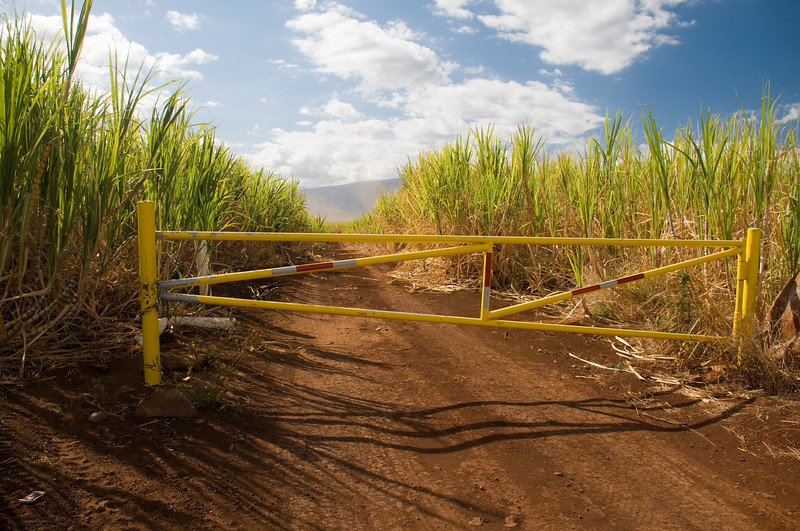 Yellow Gate to Cane