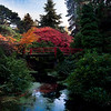 Autum colors from the stunning Washington Arboretum in Seattle