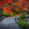 Fall Colors In The Washington Arboretum, Seattle, WA