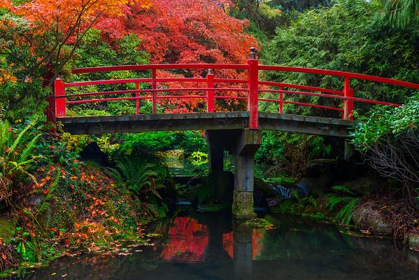 Fall Colors In Kubota Gardens, Seattle, WA