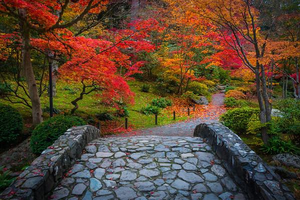 Fall Colors In The Washington Arboretum, Seattle, WA Crossing Paths Into A New Season - Washington Arboretum, Seattle, Washington St