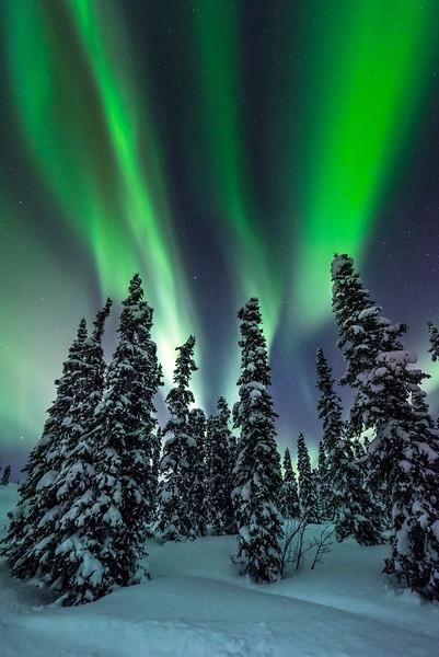 Three Stripes -Fairbanks, Mt Aurora Skiland, Alaska