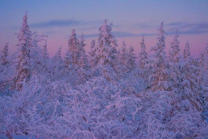 The Twilight Forest In All Its Color -Ester Dome, Fairbanks, Alaska