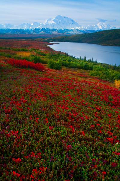 The Start Of Autumn In Denali - Denali National Park, Alaska