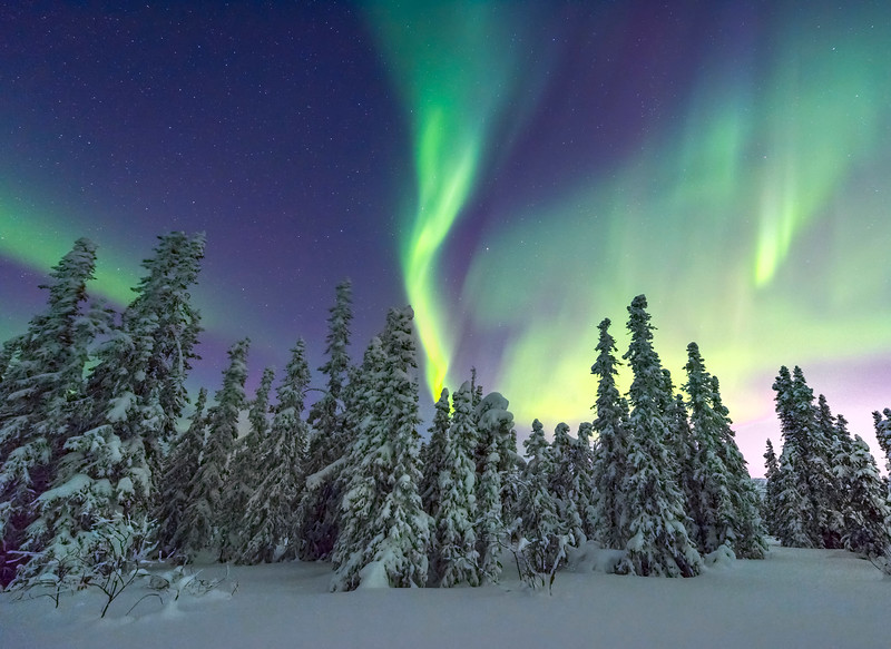 Guardian Of The Night -Fairbanks, Mt Aurora Skiland, Alaska