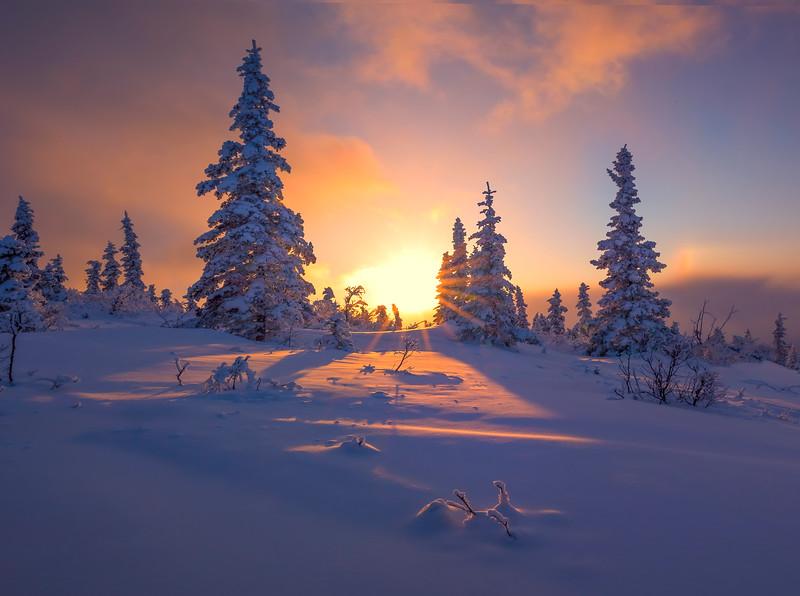 Sunburst Through The Winter Snow -Ester Dome, Fairbanks, Alaska