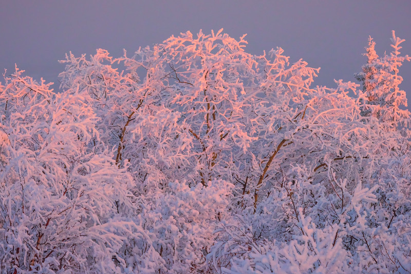 A Touch Of Pink Light -Ester Dome, Fairbanks, Alaska