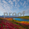 Images from autumn season in Denali National Park