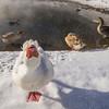 Look Straight At Ya -Chena Hot Springs Resort, Outside Fairbanks, Alaska