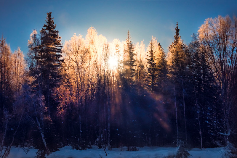 SunGlow Burst Through Trees -Chena Hot Springs Resort, Fairbanks, Alaska