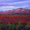 A Wall Of Peaks In Last Light - Denali National Park, Alaska