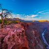 Toroweap Overlook And Unusual Tree - Toroweap Overlook, Grand Canyon National Park, AZ