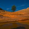 The Solo Tree Under The Stars White Pockets, Vermillion Cliffs, AZ