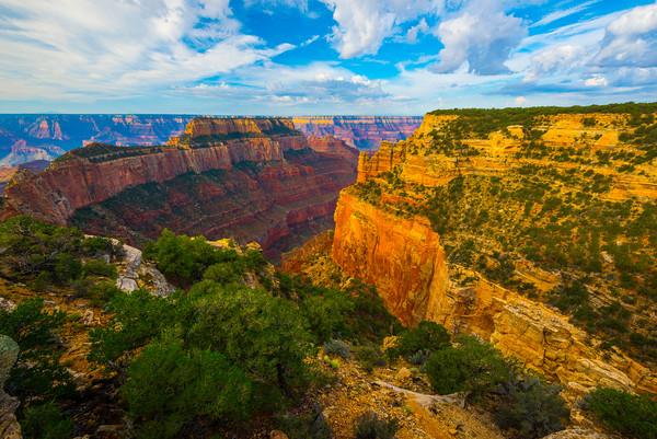 Green Foliage Along The Canyon Edge - North Rim, Grand Canyon National Park, AZ