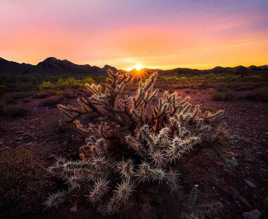 Cholla Cactus Rimfire - Phoenix Mountain Preserve, Arizona