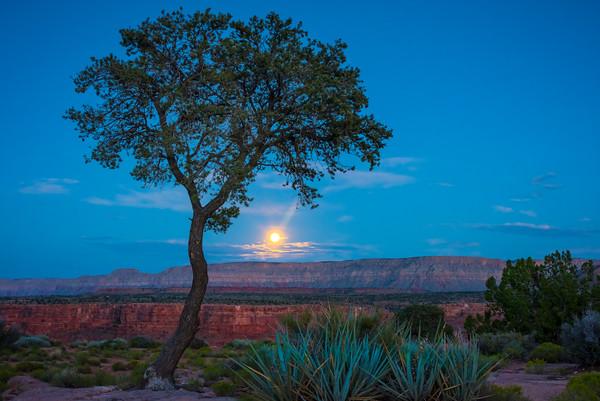 Grand Canyon Under The Moonlight - Toroweap Overlook, Grand Canyon National Park, AZ
