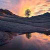 Tree In All Its Glory White Pockets, Vermillion Cliffs, AZ