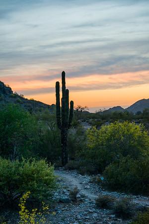 Images from around Arizona during wildflower spring season
