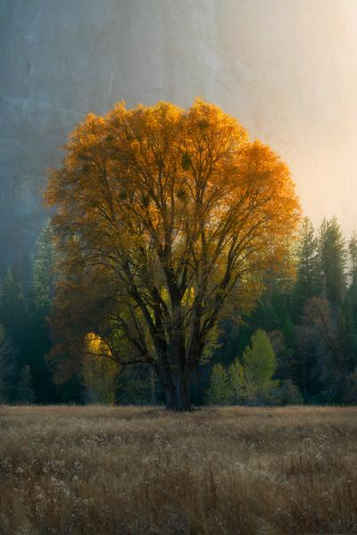 Autumn Glory In El Captain Meadow - Yosemite National Park, California