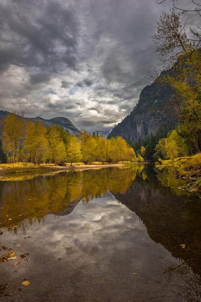Aspens Along River From Sentinel Beach - Yosemite National Park, Eastern Sierras, California