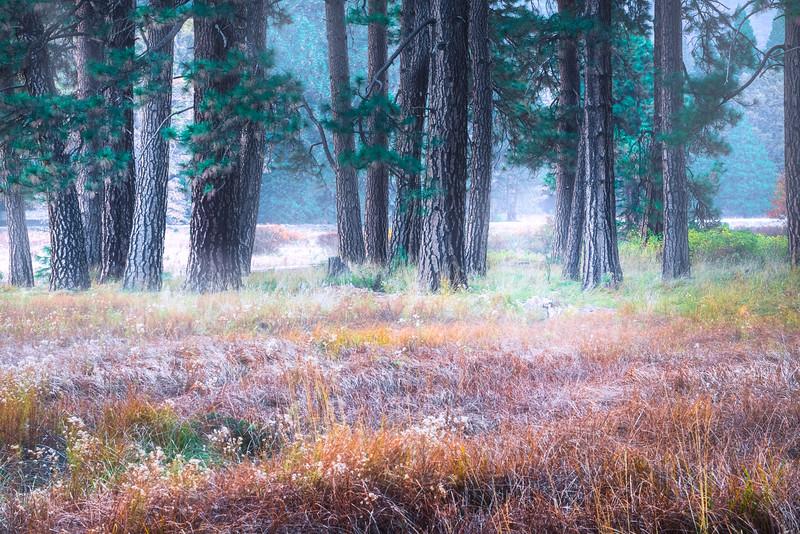 Cooks Meadow Fog Rising - Lower Yosemite Valley, Yosemite National Park, CA