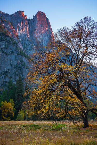 Last Light On Peaks Framed By Autumn Tree - Yosemite National Park, Eastern Sierras, California