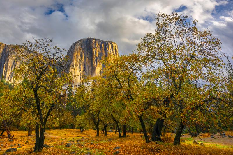 El Captain From Bridalveil Viewpoint - Yosemite National Park, Eastern Sierras, California