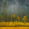 Layers Of Color In El Captain Meadow - Yosemite National Park, Eastern Sierras, California