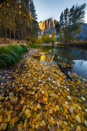 Morning Light On Upper Yosemite From Banks Of Merced At Swinging Bridge - Yosemite National Park, California
